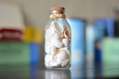 Een fles van lichte shells royalty-vrije stock afbeelding
