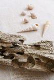 Het hout van de afwijking & zeeschelpenstilleven Stock Foto's