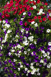 Een foto van bloemen om een straat te verfraaien Stock Foto's
