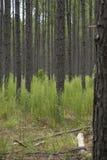 Een foto van bomen in het hout Royalty-vrije Stock Afbeelding