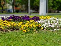 Een foto van kleurrijke bloemen in gras stock afbeeldingen