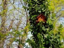 Een foto van vogelhuis op een boom stock foto