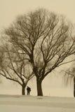 Een fotograaf onder een boom Royalty-vrije Stock Afbeeldingen