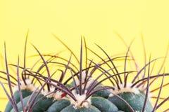 Een fragment van cactus op een gele achtergrond stock foto