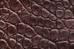 Een fragment van krokodilhuid De huid van de krokodil royalty-vrije stock afbeeldingen
