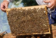 Een frame met honingraten Stock Foto