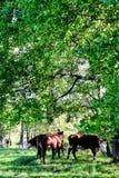 Een gang in de lente buiten het Zweedse platteland Royalty-vrije Stock Foto