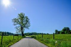Een gang in de lente buiten het Zweedse platteland Royalty-vrije Stock Foto's