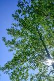 Een gang in de lente buiten het Zweedse platteland Royalty-vrije Stock Afbeelding