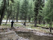 Een gang door dik groen bos royalty-vrije stock foto's
