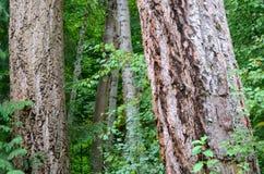 Een gang in het bos stock afbeeldingen