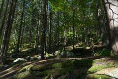 Een gang in het bos royalty-vrije stock afbeelding