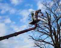 Een gardner met een kettingzaag snoeit de bomen van een luchtplatform Blauwe en bewolkte hemel op achtergrond royalty-vrije stock fotografie