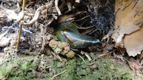 In een gat, in het geheim groeit een bamboespruit stock foto