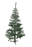 Een geïsoleerde Kerstboom Royalty-vrije Stock Foto's