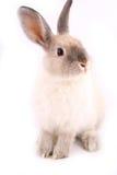 Een geïsoleerde konijn Stock Foto's