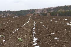 Een gebied met vruchtbare die grond met eerste sneeuw en groene installaties voor het landbouwwerk aangaande een bos herfst tonee Royalty-vrije Stock Afbeeldingen