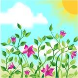 Een gebied van bloemen Stock Foto's