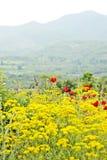 Een gebied van gele bloemen en rode bloemen Stock Afbeeldingen
