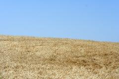 Een gebied van graan Royalty-vrije Stock Fotografie