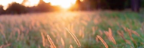 Een Gebied van Gras in de Mooie Gloed van een Australische Zonsondergang stock foto's
