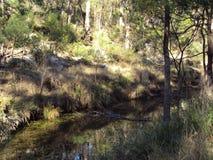 Een gebied van natuurlijke bushland in Australië stock foto's