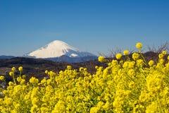 Een gebied van raapzaad met Onderstel Fuji Royalty-vrije Stock Foto's