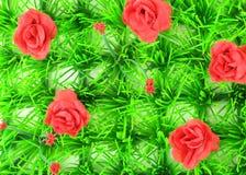 Een gebied van rozen Royalty-vrije Stock Afbeelding