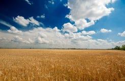 Een gebied van tarwe stock afbeeldingen