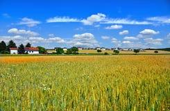 Een gebied van tarwe dichtbij stad Wimpassing een der Leitha oostenrijk stock foto's