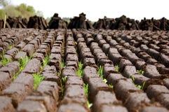 Een gebied van vers Gesneden Gras Royalty-vrije Stock Foto's