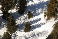 Een gebiedsmening van pijnboombomen en sneeuw behandelde landschap in de alpen Zwitserland royalty-vrije stock afbeelding