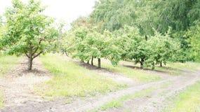 Een gebiedsweg langs de boomgaard Stock Foto's