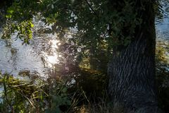 Een gebogen boom op de kust van een kanaal Stock Afbeelding