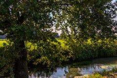 Een gebogen boom op de kust van een kanaal Stock Foto