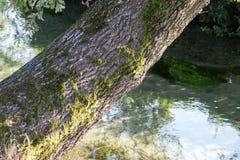 Een gebogen boom op de kust van een kanaal Royalty-vrije Stock Afbeeldingen