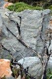 Een gebrande boom Stock Fotografie