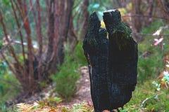 Een gebrande steenkool van de boomboomstam stock afbeelding