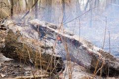 Een gebroken boom op brand stock foto's