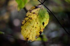 Een gebroken geel blad tegen donkere vage achtergrond in diep voor Royalty-vrije Stock Afbeeldingen