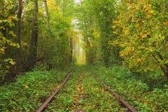 Een gebroken logboek dichtbij het spoor Een spoorweg in de de herfst bos Beroemde die Tunnel van liefde door bomen wordt gevormd  Stock Foto