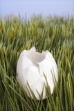 Een gebroken wit ei Stock Fotografie