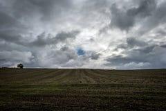 Een gebruind gebied met een boom op de horizon onder donkere wolken royalty-vrije stock fotografie