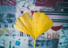 Een geel blad van een boom van ginkgobiloba over een pastelkleurachtergrond stock foto
