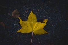 Een geel esdoornblad op donker asfalt stock foto's