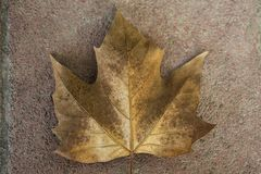 Een geelachtig blad die op een steenweg liggen royalty-vrije stock fotografie