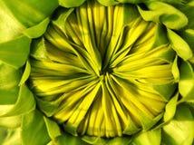 Een geelgroene knop stock foto