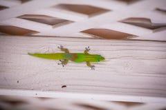 Een gekko klampt zich aan een muur vast Royalty-vrije Stock Fotografie