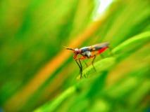 een gekleurd insect stock foto