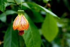 Een gele bloem zoals een tegenhanger Royalty-vrije Stock Afbeeldingen